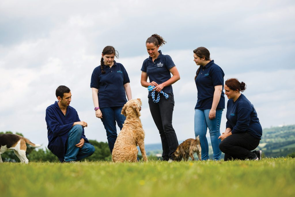 Group of students having practice with dogs in garden