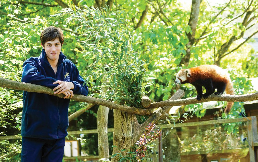 Man standing next to red panda in zoo